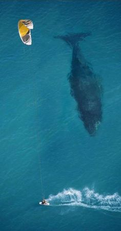 Kitesurfer and whale on the coast of Australia • photo: Mike Swaine on Above Photography