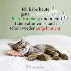 have very bad Elan reception today and my crime volume is also scho . - Sprüche -I have very bad Elan reception today and my crime volume is also scho . Cute Cats, Funny Cats, Funny Animals, Allergic To Cats, Very Bad, Friend Memes, Cat Wallpaper, Humor Grafico, Cat Memes