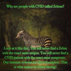 """Why CVID Patients Are Called Zebras A lot of Doctors have never heard of CVID, and that is very scary for patients because we sometimes go for decades without a proper diagnosis. People with CVID are called Zebras because doctors are taught in medical school, """"If it looks like a horse and sounds like a horse then think horse–not zebra"""" (as in a rare disease). As CVID patients we're the exception! We are Zebras!........"""