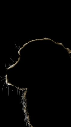 Source by sabinabauknecht dog dog memes dog videos videos wallpaper dog memes dog quotes dogs dogs pictures dogs videos puppies puppy video Silhouette Painting, Dog Silhouette, Dog Wallpaper Iphone, Black And White Art Drawing, In The Pale Moonlight, Shadow Art, Draw On Photos, Deviant Art, Black Paper