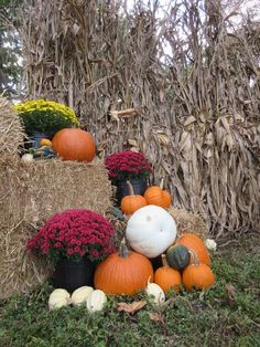 Colorful Autumn Harvest Photo by Sandra Halter — National Geographic Your Shot