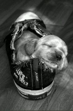 a dog's d r e a m | photography | golden retriever puppy | puppies | cute puppy