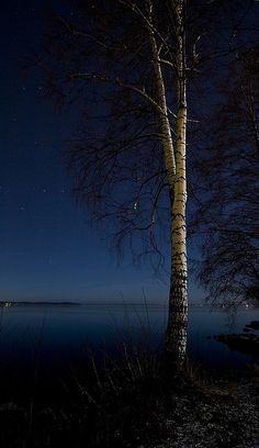 loveandaquestion:  blue horizon with tree lit by the moon by Vesa-Valtteri on Flickr.