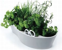 Most stylish indoor herb gardens to exercise your green thumb : Hometone >> Love the spot for scissors