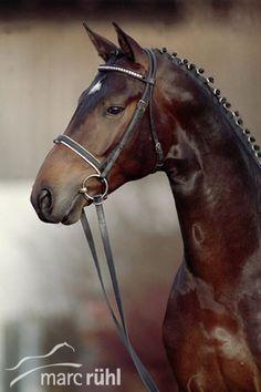 Marc Rühl Horse Photography