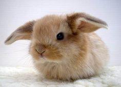 DesertRose///animals being adorable