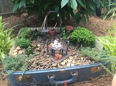 Fairy Garden in a suitcase. Variegated Thyme, dwarf evergreen, Turkish Thyme, and training some Vinca Vine up that trellis