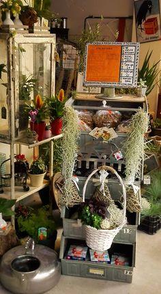 Kom voor huisdecoratie artikelen, unieke planten en inspiratie langs in onze winkel in Geleen
