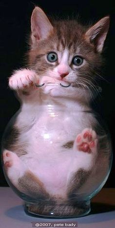 candy kitty #by indi-is-conan on DeviantArt #cat cats kitten sweet cute fluffy fur animal pet nature