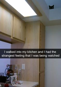 I walked into my kitchen and I had a strangest feeling that I was being watched.