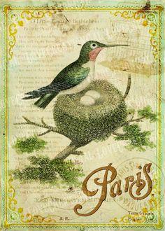 tarjeta postal 5 x 7 para imprimir Arte Digital imágenes Vintage primavera pájaro nido jaula botánico rosa flores París Francés marco ACEO tarjeta hoja Sh097