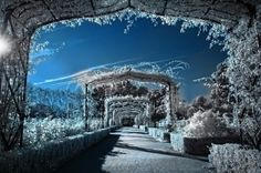 Winter Gardens by Alfon No on 500px