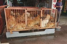 <p>Moran Market, one of the most infamous dog meat market, responsible for the sale of around 80,000 dogs a year, officially shut its doors</p>