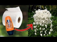 Cotton Buds and Toilet Paper Flower - YouTube