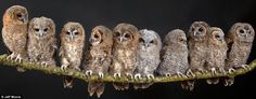 10 lost and abandoned owls forming a family at St. Tiggywinkles animal hospital.