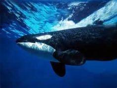 Life Under The Ocean -
