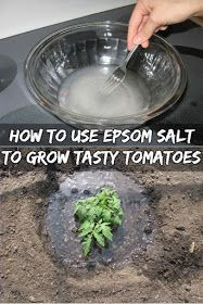First of all, Epsom salt is not salt. It is NOT something you can put on your food! It's actually a compound called magnesium sulfate that occurs naturally. And Epsom Salt is known for providing Fertilizer For Plants, Hydroponic Gardening, Hydroponics, Container Gardening, Organic Gardening, Gardening Tips, Fertilizer For Tomatoes, Gardening Gloves, Epsom Salt Fertilizer