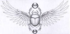 google images/scarab beetle - Google Search