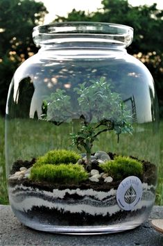 In that case what makes a terrarium sympathetic and attractive for indoor decoration? bulb, teapot, jar, a bottle could turn into a terrarium. Mini Terrarium, Terrarium Plants, Succulent Terrarium, Terrarium Wedding, Water Terrarium, Plants In Jars, Air Plants, Indoor Plants, Moss Garden