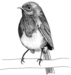 Drawing of a robin Ink Pen Art, Art Drawings Sketches Simple, Animal Sketches, Bird Drawings, Pencil Art Drawings, Black Pen Drawing, Black And White Art Drawing, Ink Illustrations, Illustration Art