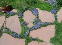 """Swapping out grass for colorful ground cover is a great choice for low maintenance """"lawn"""""""