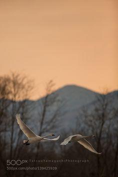 http://ift.tt/1K6283m #animals sunset by tatsuoyamaguchi http://ift.tt/20GFTss #pierceandbiersadorf