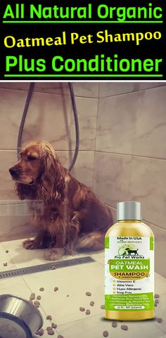 Our Oatmeal Dog Shampoo And Conditioner is recommended by Vets and Specially formulated for pets with allergies to food, grass and flea bites. Oatmeal Shampoo, Cat Shampoo, Shampoo And Conditioner, Dry Container, Dog Smells, Natural Vitamin E, Vinegar And Water, Flea Treatment, Dog Eyes
