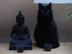Os Gatos são  verdadeiras esculturas e têm sensibilidade para o que a maioria dos humanos não enxerga...