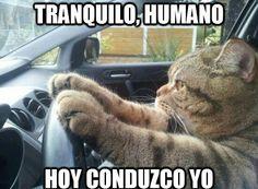 El chófer soy yo