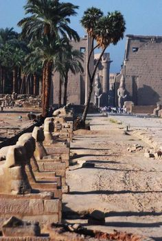 The Avenue of Sphinxes leading to the Temple of Karnak in Luxor. Egyptian Temple, Luxor Temple, Luxor Egypt, Egypt Travel, Africa Travel, Ancient Ruins, Ancient Egypt, Egypt Wallpaper, Places To Travel