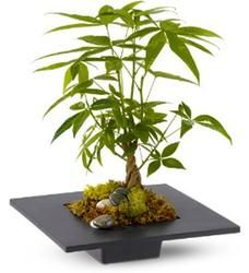 Good Fortune Gift Idea: Money Tree.   #pintowinGifts & @giftsdotcom