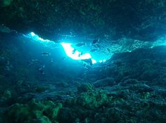 Go scuba diving at Keri Caves - Top 20 Things to do on Zante holidays Purple Tips, Beautiful Places In The World, Scuba Diving, Greece Holidays, Things To Do, Caves, Turtles, Beach, Top