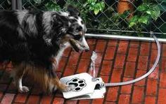 Dog Push Pedal Water Fountain