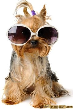 Dog wtih Sunglasses