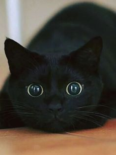 Je nen crois pas mes yeux !!! Une souris me nargue ! elle me provoque !!! Elle va manger toutes mes croquettes !!!