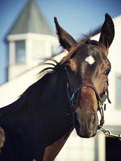 Photo Credit: Joe Pugliese. A colt of champion racehorse Zenyatta.