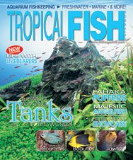 The January 2012 issue of TFH featured articles on magnificent aquascapes, three-spot gouramis, fish for nano tanks, blue-spotted jawfish, and more!