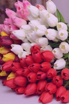 You can order flowers online to give pleasant surprise to your loved one. Let your valentine feel essence of flowers and why these flowers are symbol of beauty which doesn't disappear with age but remain with you for lifetime. Tulips Garden, Tulips Flowers, All Flowers, Exotic Flowers, Amazing Flowers, Beautiful Roses, Colorful Flowers, Beautiful Flowers, Send Flowers Online