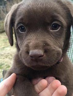 Just got a new pupper - more at superhuggable.com
