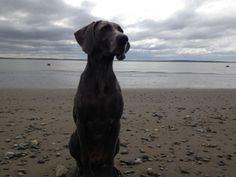 Our good girl on the beach in Alaska.