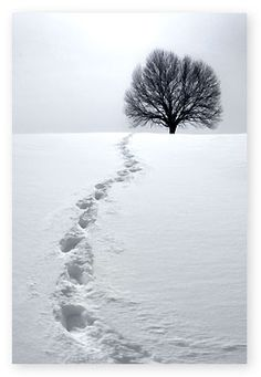 Snow photography tips.