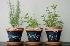 Great affordable idea for your Christmas herb garden gifts. Paint clay pots with chalkboard paint, then use white chalk to write the name so the herb!