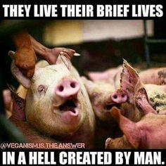 #NAHbrah -- No Animals Harmed