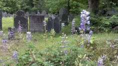 Turkey Hill Cemetery, Merrimack NH from blog post ArchivesInfo: Cemeteries at the Heart of Communities
