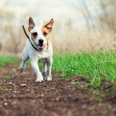 A Guide to Using Slippery Elm for Pets (From Wounds to Tummy Trouble, It Heals)