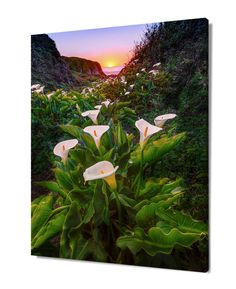 Large Flower Print, California Photography, Calla Lily, Big Sur Photo, Floral Home Decor, California Seascape, Fine Art Sunset Home Decor by SusanTaylorPhoto on Etsy