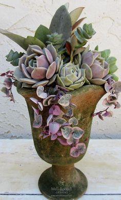 Succulentes dans une poterie ancienne