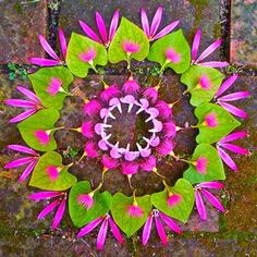 Flower-Mandalas-Floral-creations-by-Kathy-Klein-9