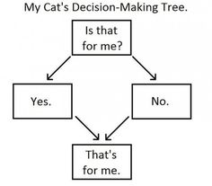 My cat's decision making tree.  #animals #cat #funny #decisionMakingTree