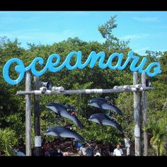 Oceanario 05 - Islas del Rosario #Colombia
